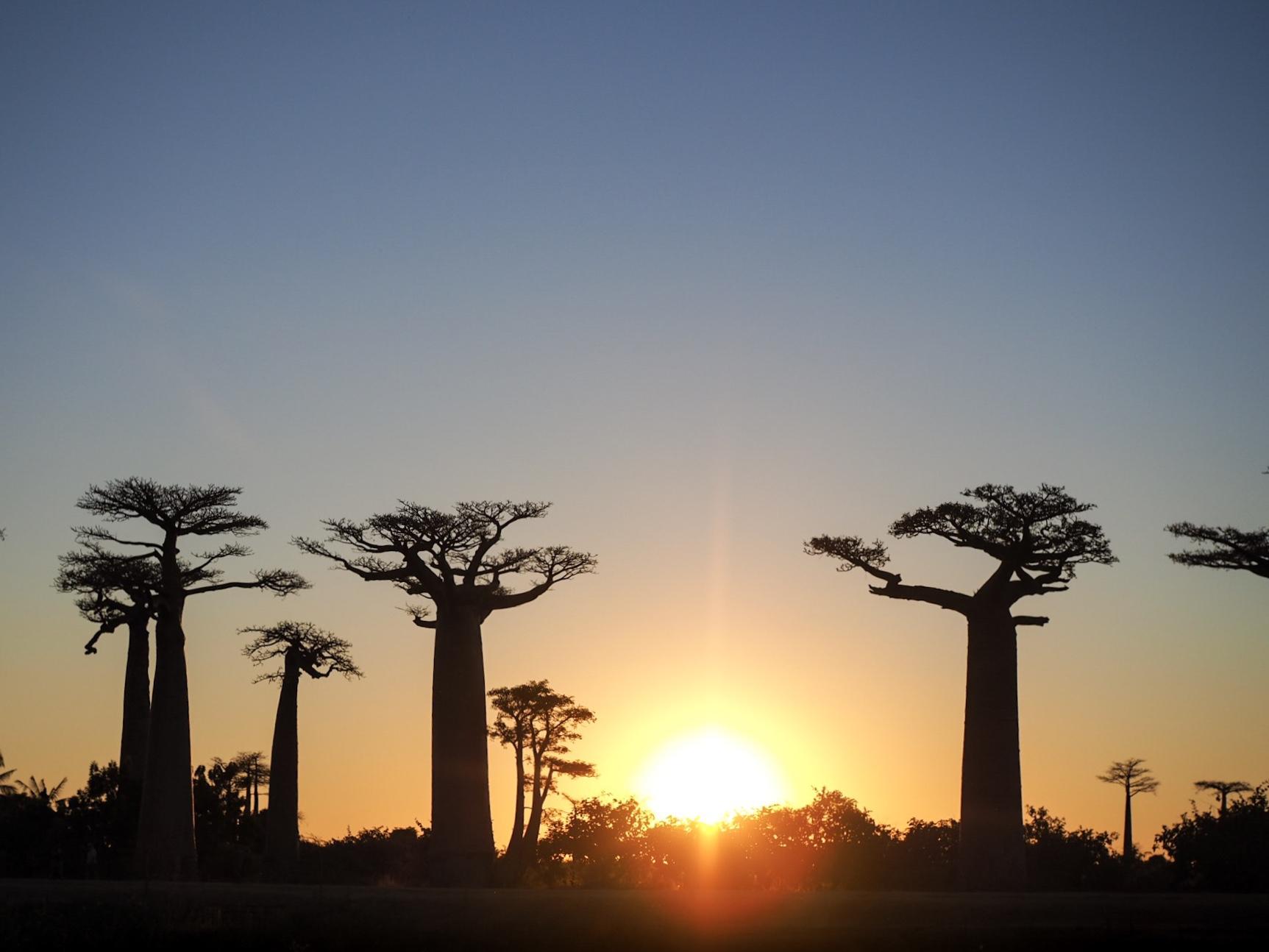 【マダガスカル/モロンダバ 】バオバブの木を見に行くツアーについて<2019年最新情報>