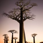 【マダガスカル/モロンダバ】バオバブの木を見に行く方法<2019年最新情報>